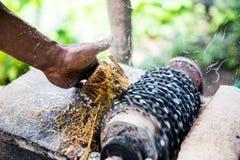 Malande ätlig palmträd Arkivbild