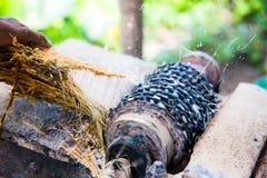Malande ätlig palmträd Royaltyfria Bilder