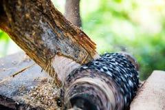 Malande ätlig palmträd Arkivfoto