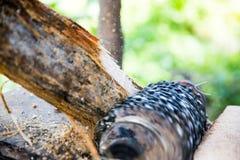 Malande ätlig palmträd Arkivbilder