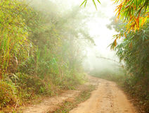 malande djungelvägen Arkivfoto
