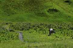 Unreconized people. Scenic Green grass field view of rolling countryside green farm fields with horse. MALANG, EAST JAVA, INDONESIA, APRIL 2, 2019 : Unreconized stock photo
