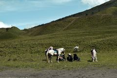 Unreconized people. Scenic Green grass field view of rolling countryside green farm fields with horse. MALANG, EAST JAVA, INDONESIA, APRIL 2, 2019 : Unreconized royalty free stock photo