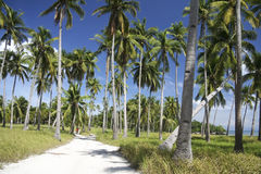 Malapascua island sandy roads palm trees philippines Royalty Free Stock Photography