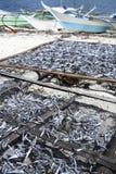 Malapascua a séché des bateaux de pêche de poissons Philippines Photos stock