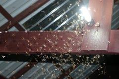 Malar som flyger runt om ljusa kulor Arkivbilder