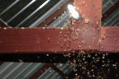 Malar som flyger runt om ljusa kulor Royaltyfri Fotografi