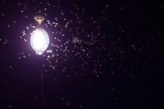 Malar som flyger runt om purpurfärgade ljusa kulor Arkivbild