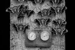 Malar som ut hänger på en svartvit vägg Arkivbild