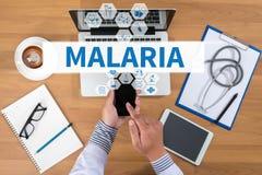 malaria stock afbeeldingen