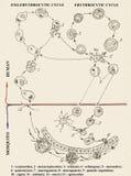 Malarian κύκλος ζωής plasmodium Βιολογική εικόνα Στοκ Εικόνες