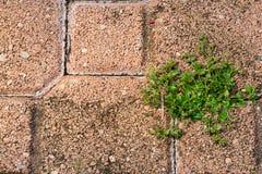 Malas hierbas Foto de archivo libre de regalías