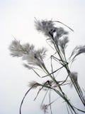 Malas hierbas Imágenes de archivo libres de regalías