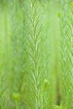 Malas hierbas altas adentro con el fondo suave del foco Imagen de archivo