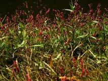 Malas hierbas bonitas fotos de archivo