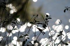 Malas hierbas con el fondo y la luz del sol del agua Imagenes de archivo