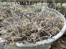 Malas hierbas congeladas Imagen de archivo libre de regalías