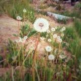 Malas hierbas de la primavera Fotografía de archivo