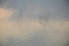Malas hierbas del agua Fotografía de archivo libre de regalías