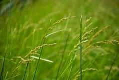 Malas hierbas en campo Imágenes de archivo libres de regalías
