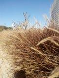 Malas hierbas en ciudad Imagenes de archivo