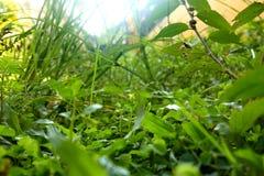 Malas hierbas en el c?sped, fotografiado con la selecci?n del foco foto de archivo libre de regalías