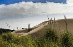 Malas hierbas en las dunas de arena gigantes de Te Paki Foto de archivo libre de regalías