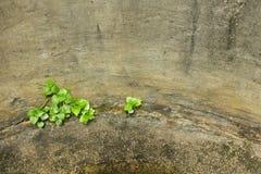 Malas hierbas en pozo de agua Fotografía de archivo