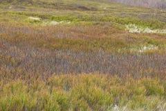 Malas hierbas espinosas amarillas como fondo Fotografía de archivo