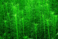 Malas hierbas hermosas Fotografía de archivo
