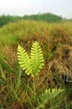 Malas hierbas hermosas Foto de archivo