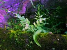 Malas hierbas hermosas imagen de archivo