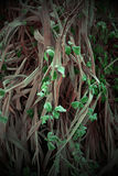 Malas hierbas hermosas en el jardín en formas abstractas Fotografía de archivo