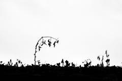 Malas hierbas marchitadas Fotografía de archivo libre de regalías