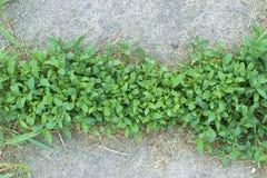 Malas hierbas que crecen en el pavimento Imagenes de archivo