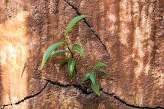 Malas hierbas que crecen a través de las grietas en el cemento Imágenes de archivo libres de regalías