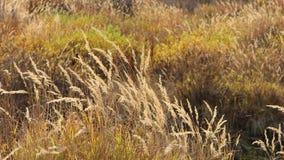 Malas hierbas salvajes Fotos de archivo libres de regalías