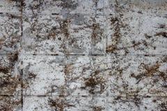 Malas hierbas salvajes en las paredes, fondo texturizado fotos de archivo libres de regalías