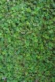 Malas hierbas verdes Imagen de archivo libre de regalías