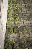 Malas hierbas verdes en la acera Imagenes de archivo