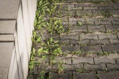 Malas hierbas verdes en la acera Fotografía de archivo
