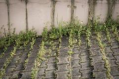 Malas hierbas verdes en la acera Foto de archivo