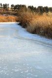 Malas hierbas y río helado en la puesta del sol Foto de archivo libre de regalías