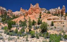 Malas sombras cubiertas de musgo del rastro de la cala, parque nacional del barranco del bryce, Utah, los E.E.U.U. Foto de archivo libre de regalías