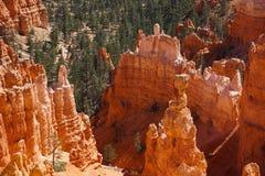Malas sombras de la hilera de árboles de Bryce Canyon Stand Tall Above Foto de archivo