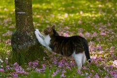 Malattia da graffio di gatto Fotografia Stock Libera da Diritti
