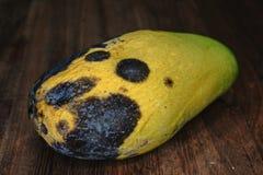 Malattia della frutta del mango causata dai funghi Immagini Stock