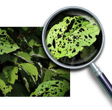 Malattia vegetale Immagine Stock
