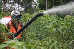 Malattia vegetale di spruzzatura Immagini Stock Libere da Diritti