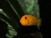 Malawi fish stock photos